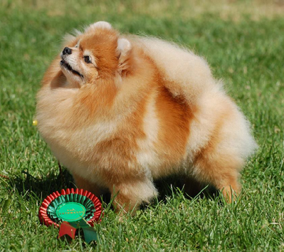 Best Veteran, 1.08.2015 (Saturday) - Winners of the International Dog Show Pori (Finland), 1 - 2 August 2015